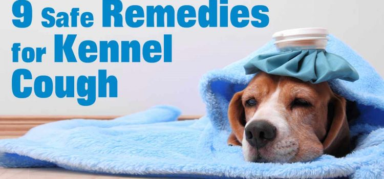 Treating Kennel Cough in Dogs